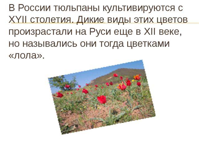 В России тюльпаны культивируются c XYII столетия. Дикие виды этих цветов прои...