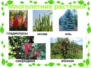 Многолетние растения гладиолусы осока ель смородина яблоня