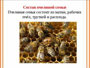 Состав пчелиной семьи Пчелиная семья состоит из матки, рабочих пчёл, трутней