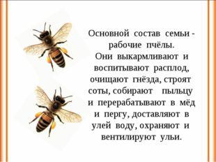 Основной состав семьи - рабочие пчёлы. Они выкармливают и воспитывают расплод