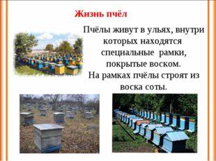 Пчёлы живут в ульях, внутри которых находятся специальные рамки, покрытые вос
