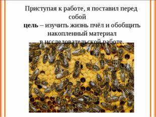Приступая к работе, я поставил перед собой цель – изучить жизнь пчёл и обобщи