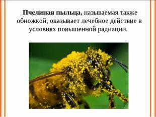 Пчелиная пыльца, называемая также обножкой, оказывает лечебное действие в ус
