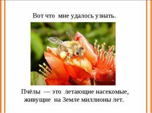 Вот что мне удалось узнать. Пчёлы — это летающие насекомые, живущие на Земле