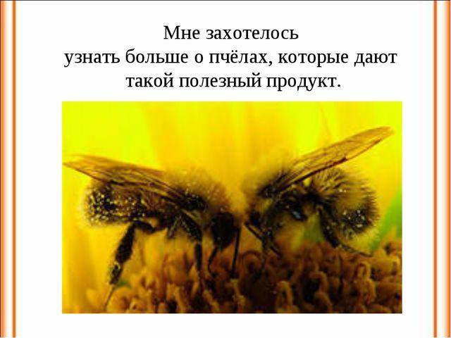 Мне захотелось узнать больше о пчёлах, которые дают такой полезный продукт.