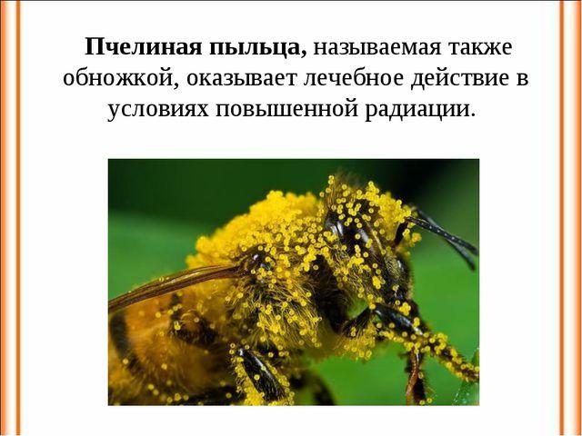 Пчелиная пыльца, называемая также обножкой, оказывает лечебное действие в ус...
