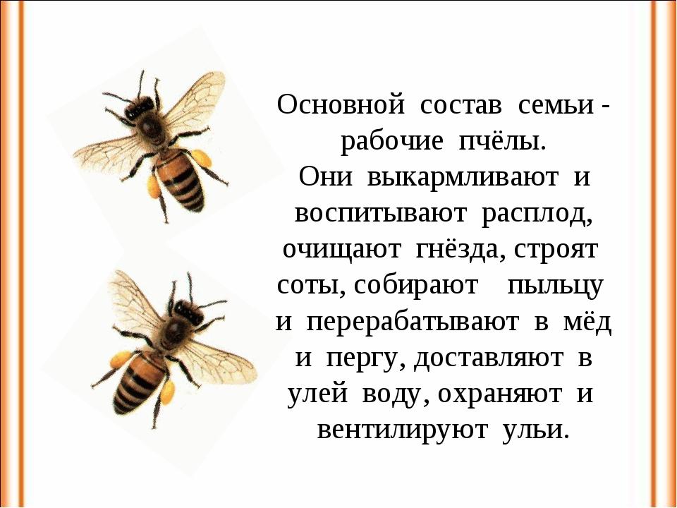 Основной состав семьи - рабочие пчёлы. Они выкармливают и воспитывают расплод...
