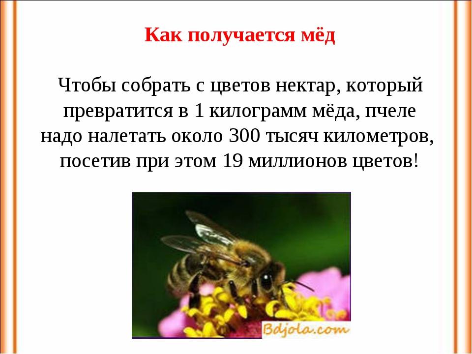 Как получается мёд Чтобы собрать с цветов нектар, который превратится в 1 кил...