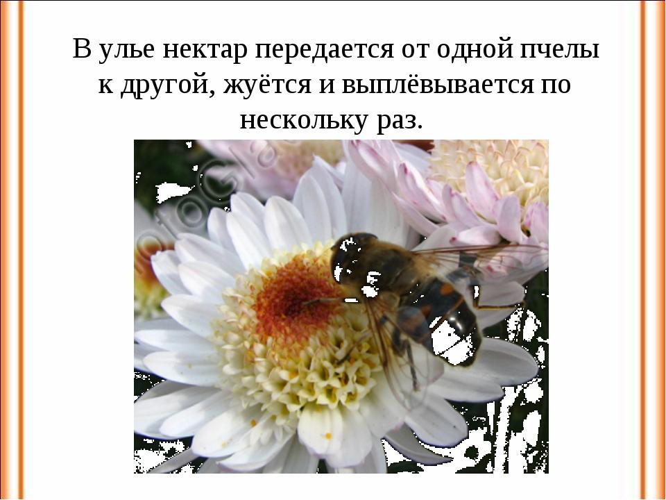 В улье нектар передается от одной пчелы к другой, жуётся и выплёвывается по н...
