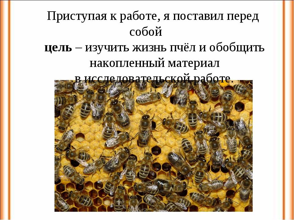 Приступая к работе, я поставил перед собой цель – изучить жизнь пчёл и обобщи...