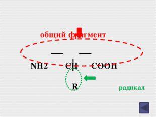 Аминокислоты– это органические вещества , которые обладают одновременно кисло