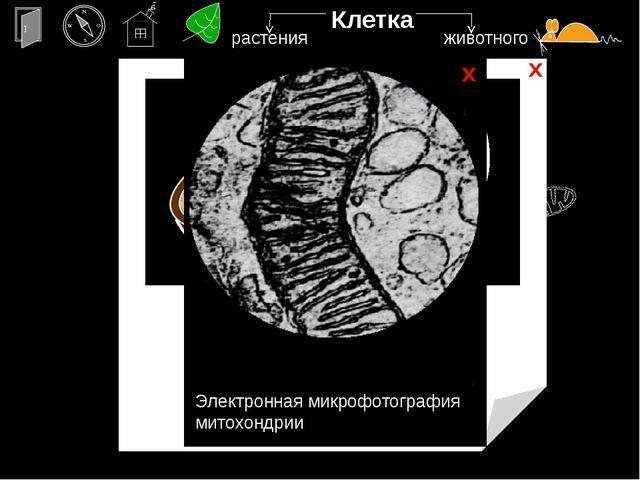 пока Навигация по презентации (информация о презентации и о правилах работы...
