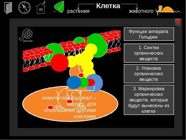 Клетка наружная мембрана х х растения животного Наружная мембрана - пленка из...