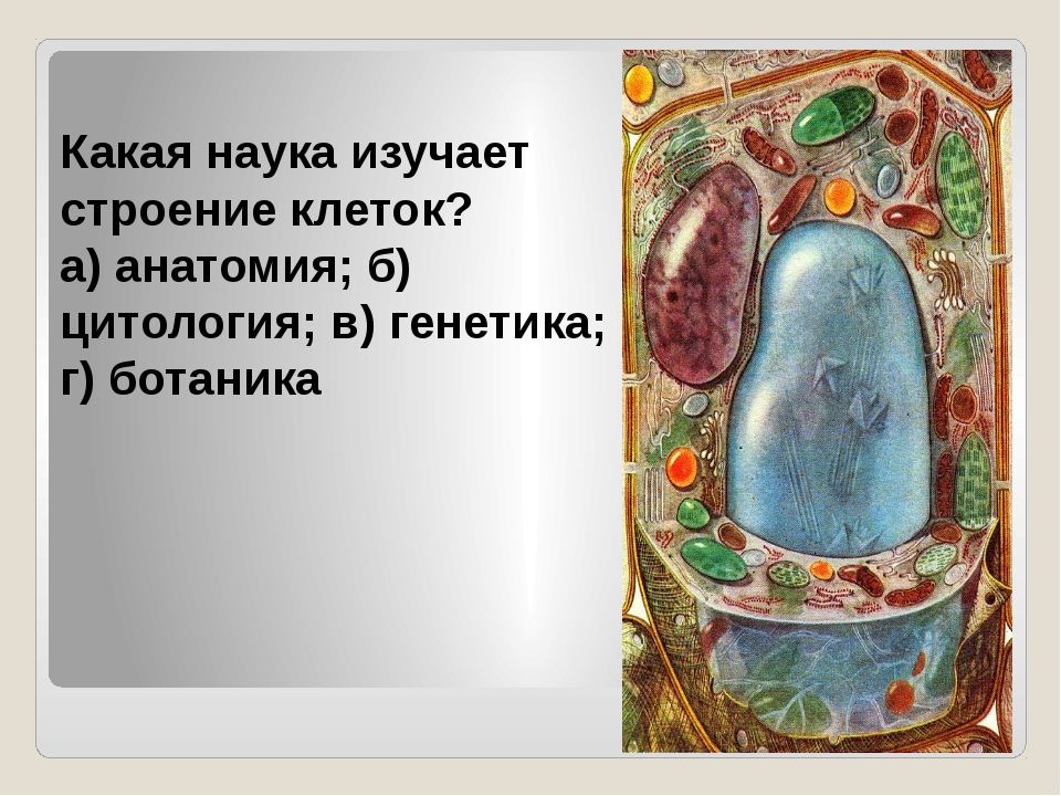 Какая наука изучает строение клеток? а) анатомия; б) цитология; в) генетика;...