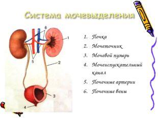 Почка Мочеточник Мочевой пузырь Мочеиспускательный канал Почечные артерии Поч