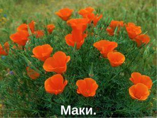 Маки.