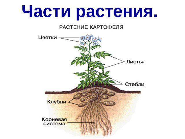 Части растения.