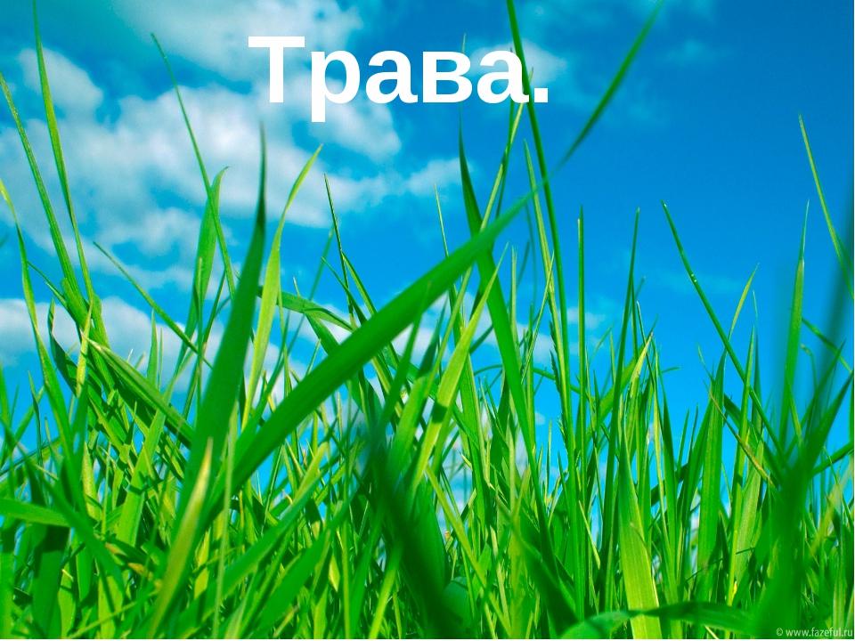 Трава.