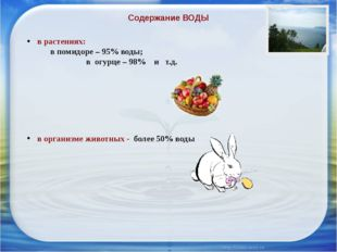 Содержание ВОДЫ в растениях:  в помидоре – 95% воды;  в огурце – 98% и т.
