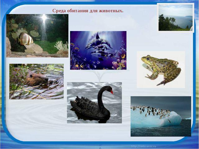 Среда обитания для животных.