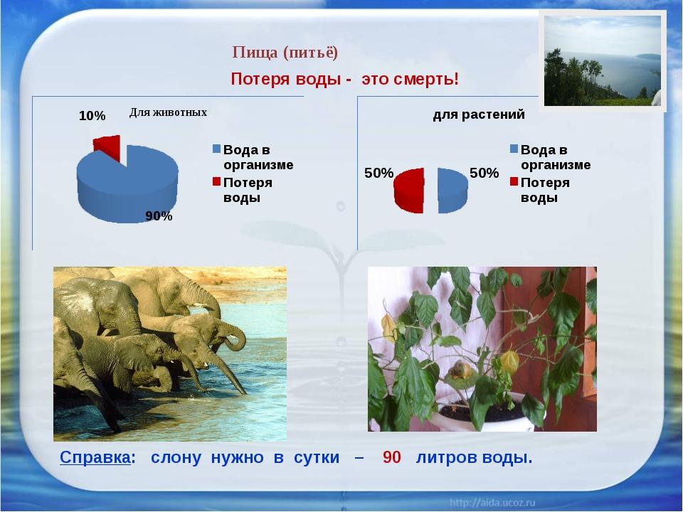 Пища (питьё) Потеря воды - это смерть! Справка: слону нужно в сутки – 90 литр...