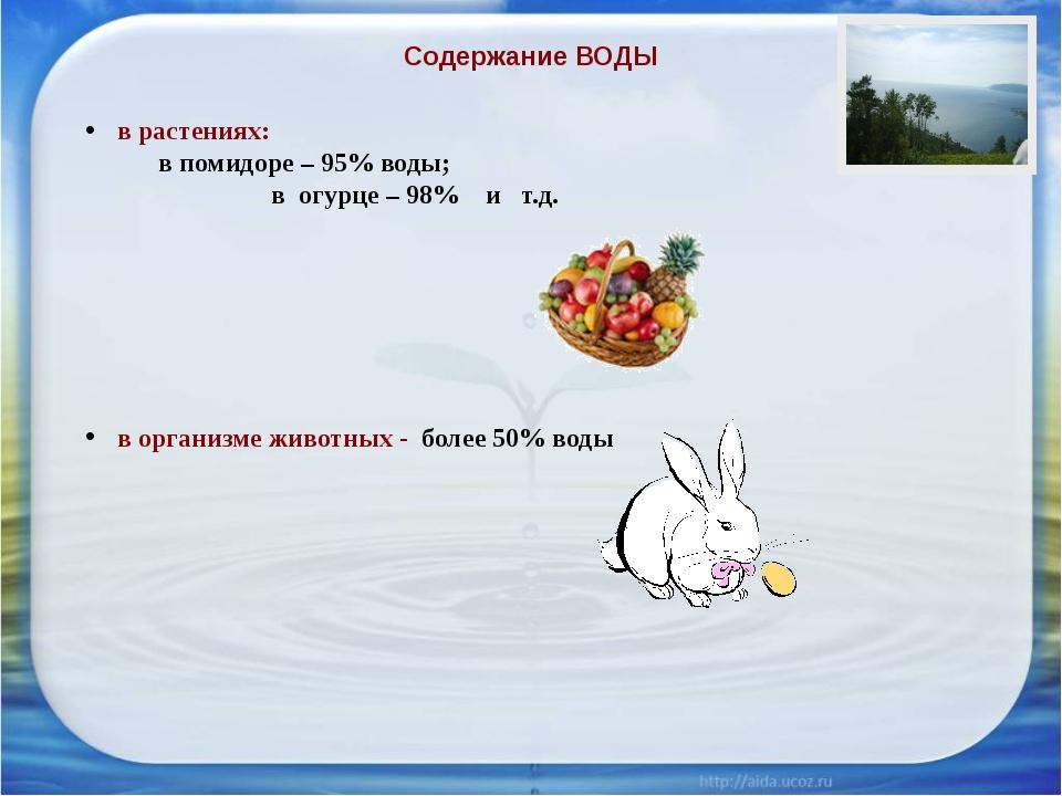Содержание ВОДЫ в растениях:  в помидоре – 95% воды;  в огурце – 98% и т....