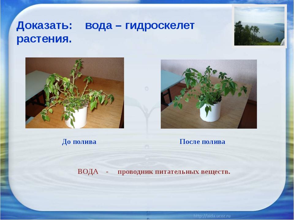 ВОДА - проводник питательных веществ. Доказать: вода – гидроскелет растения....