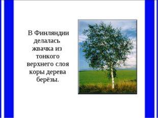 В Финляндии делалась жвачка из тонкого верхнего слоя коры дерева берёзы.