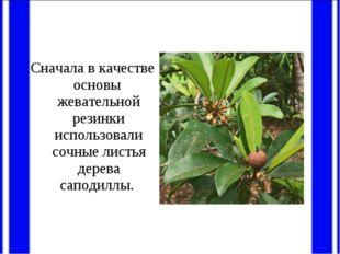 Сначала в качестве основы жевательной резинки использовали сочные листья дере