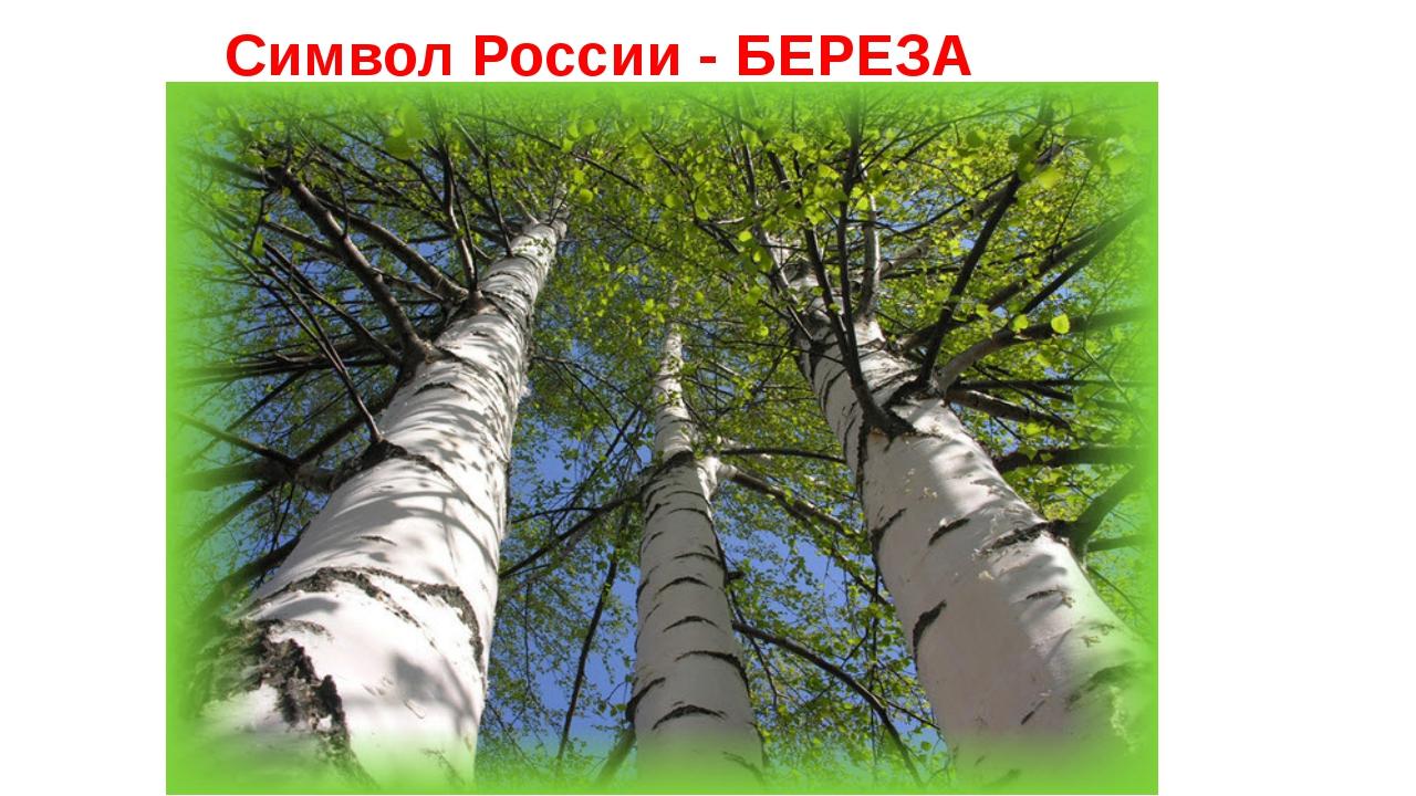 Символ России - БЕРЕЗА