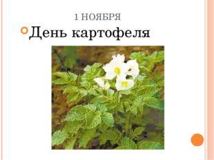 1 НОЯБРЯ День картофеля