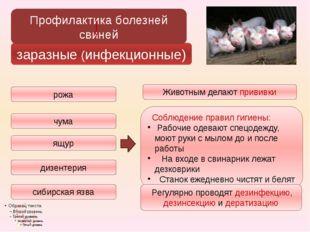 заразные (инфекционные) сибирская язва рожа чума ящур дизентерия Профилактика