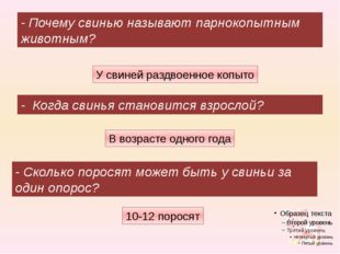 10-12 поросят - Почему свинью называют парнокопытным животным? - Когда свинья