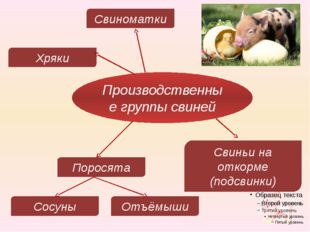 Производственные группы свиней Хряки Свиноматки Свиньи на откорме (подсвинки)