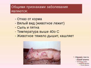 Общими признаками заболевания являются: - Отказ от корма - Вялый вид (животно