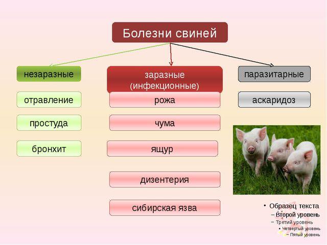 заразные (инфекционные) Болезни свиней паразитарные незаразные отравление про...