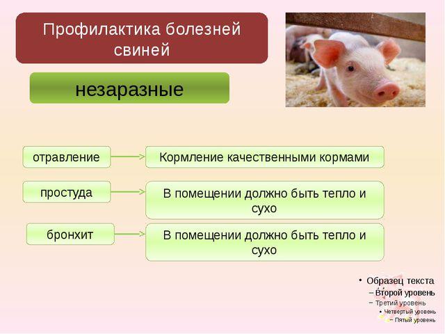 Профилактика болезней свиней незаразные отравление простуда бронхит Кормление...