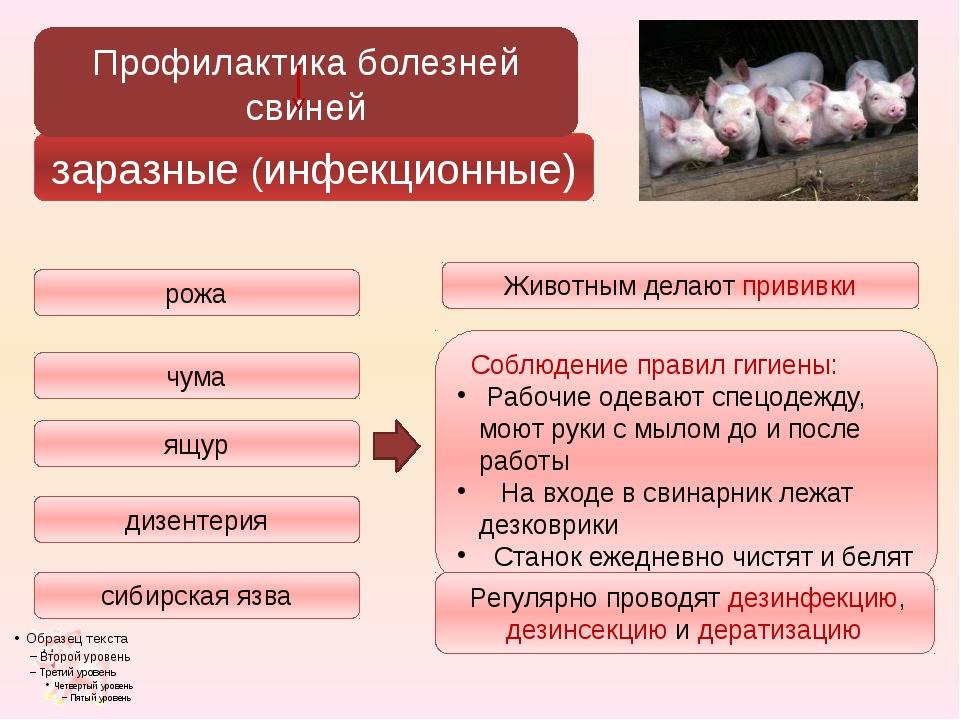 заразные (инфекционные) сибирская язва рожа чума ящур дизентерия Профилактика...
