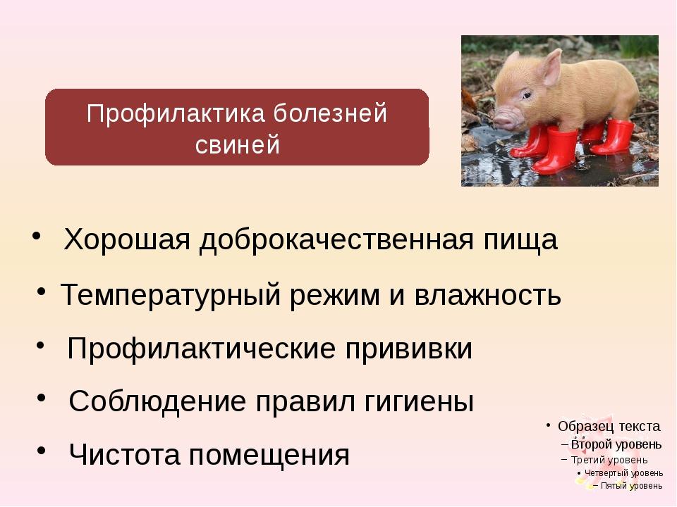 Хорошая доброкачественная пища Профилактика болезней свиней Температурный ре...