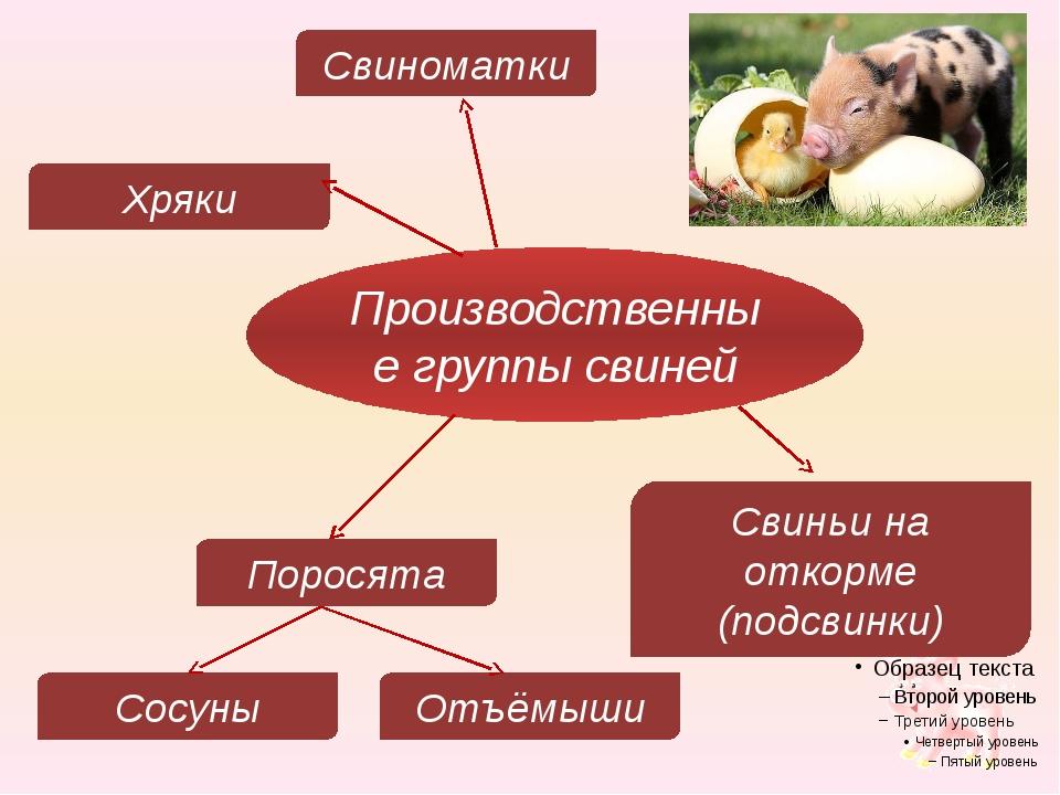 Производственные группы свиней Хряки Свиноматки Свиньи на откорме (подсвинки)...