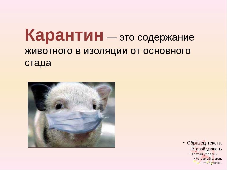 Карантин — это содержание животного в изоляции от основного стада