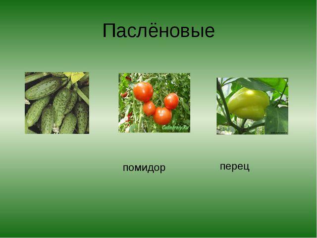 Паслёновые помидор перец