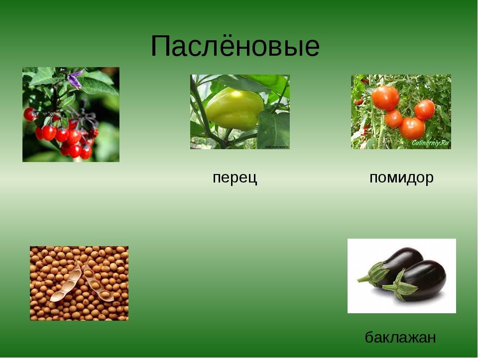 Паслёновые перец помидор баклажан