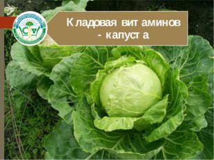 Пожалуй ни один другой овощ не приковывал к себе такого пристального внимания