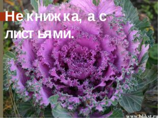 Не книжка, а с листьями. Известно, что славяне начали возделывать капусту не