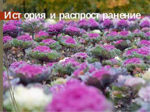 История и распространение Родина капусты – Средиземноморье, где до сих пор вс