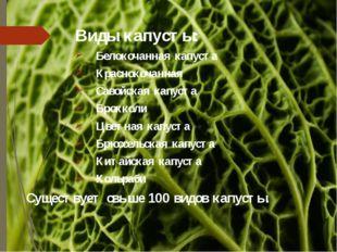 Виды капусты: Белокочанная капуста Краснокочанная Савойская капуста Брокколи