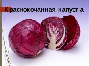 Краснокочанная капуста Краснокочанная капуста отличается от белокочанной крас