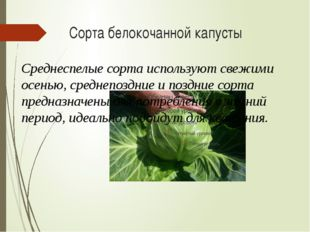 Сорта белокочанной капусты Среднеспелые сорта используют свежими осенью, сред