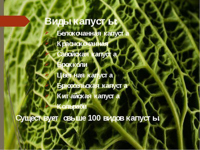 Виды капусты: Белокочанная капуста Краснокочанная Савойская капуста Брокколи...